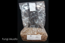 Grain Spawn - Reishi (10 x 1kg) - Plastic Bag (Wholesale)