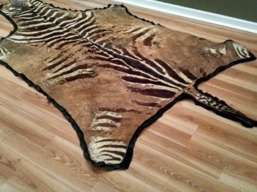 Real zebra authentic from African collection rare full size buy \WITH FREE SHIPP