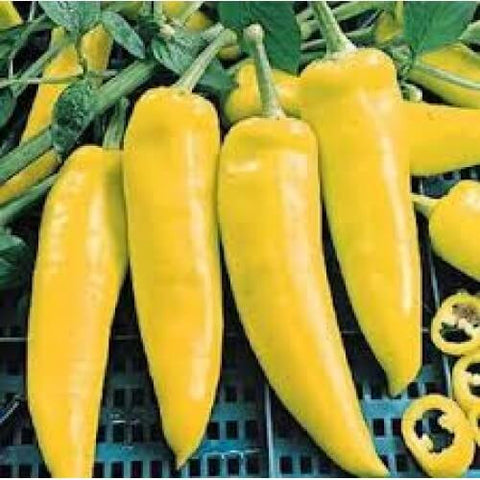 Hungarian-Yellow-Wax-chili