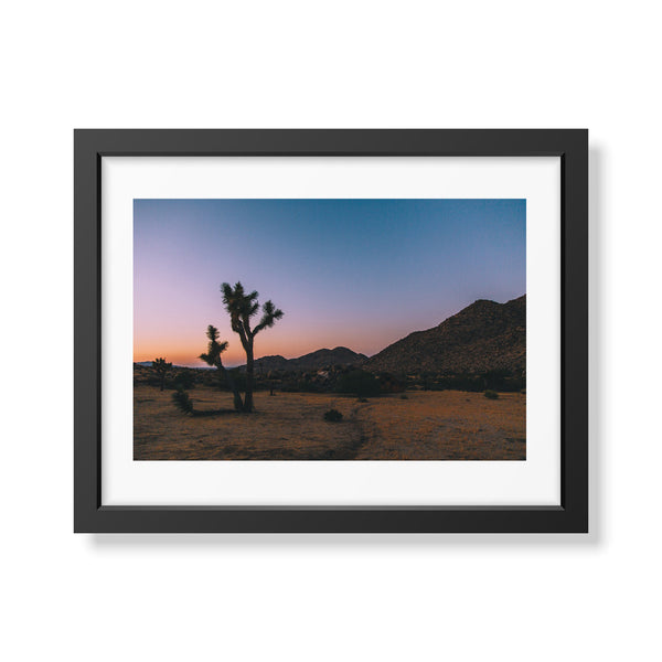 Travel Series: Joshua Tree