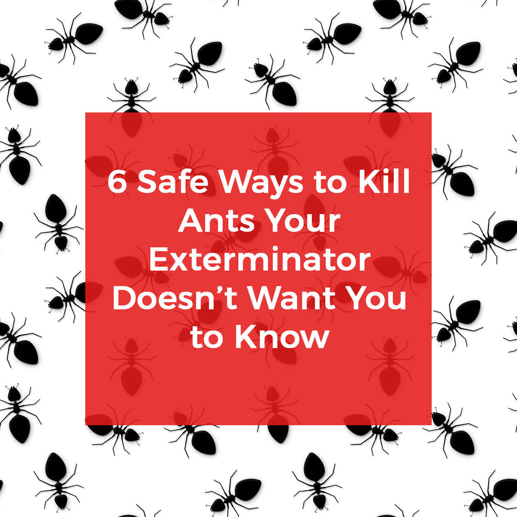 Six Killer Ways to Kill Ants Exterminators Won't Tell You