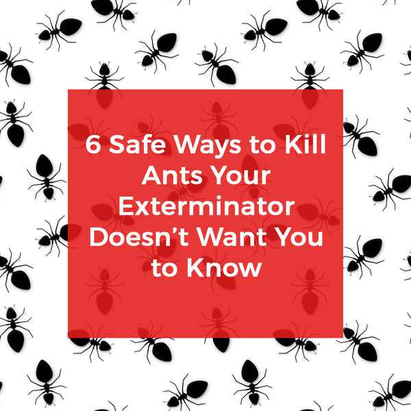 Six Killer Ways To Kill Ants Exterminators Won T Tell You
