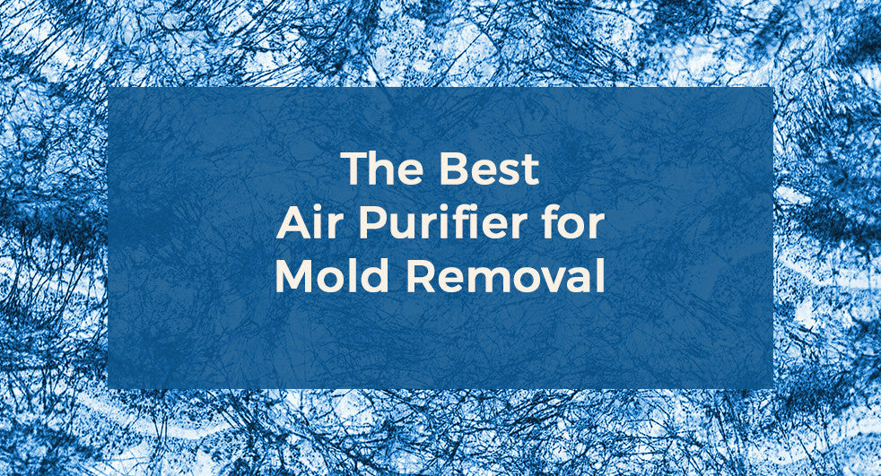 The Best Air Purifier for Mold Removal