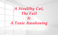 A Stealthy Cat, the Fall and a Toxic Awakening