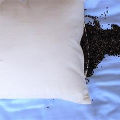 100% Organic Buckwheat Pillow with Organic Cotton Cover - PureLivingSpace.com