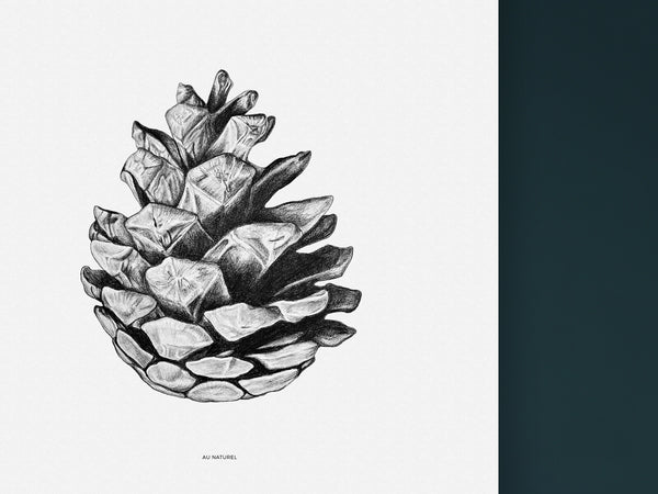Au Naturel - Black and white Art print of a fir cone by Hanna Candell.