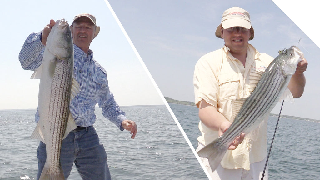 Jigging for Stripers with Twister Tails
