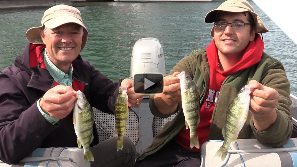 Non-Stop Perch Catching Action with Cut Bait Strips
