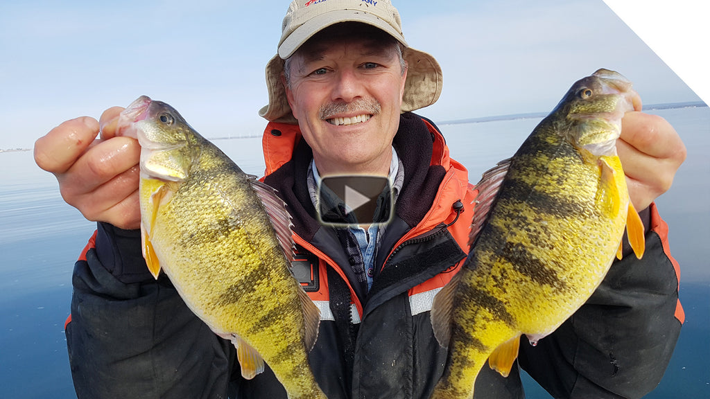 Jumbo Perch Overload! Using the Simple Stingnose Jigging Spoons