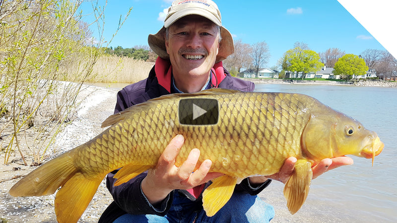 Shore Fishing for Carp - A Simple Setup for Easy Results | Boatless Angler
