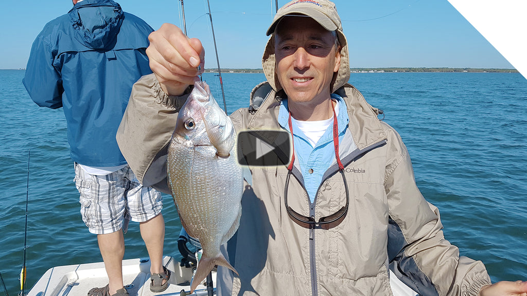 Sea Bass and Scup in Buzzards Bay - Cast and Retrieving Jigging
