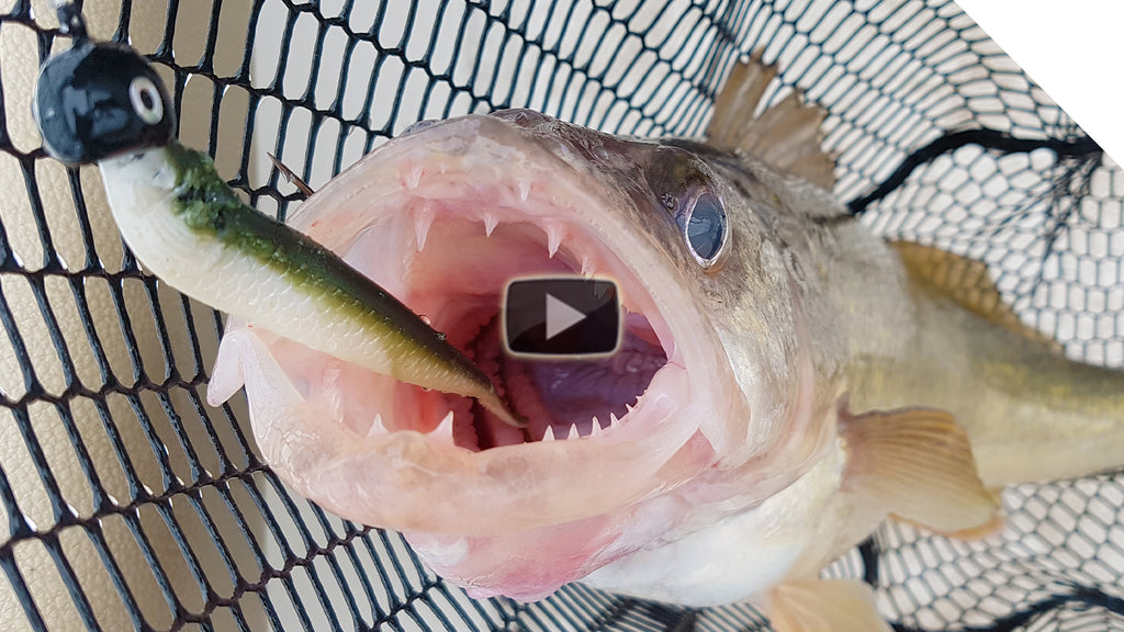 How to Catch Cold Water Walleye - Flexi Jigging