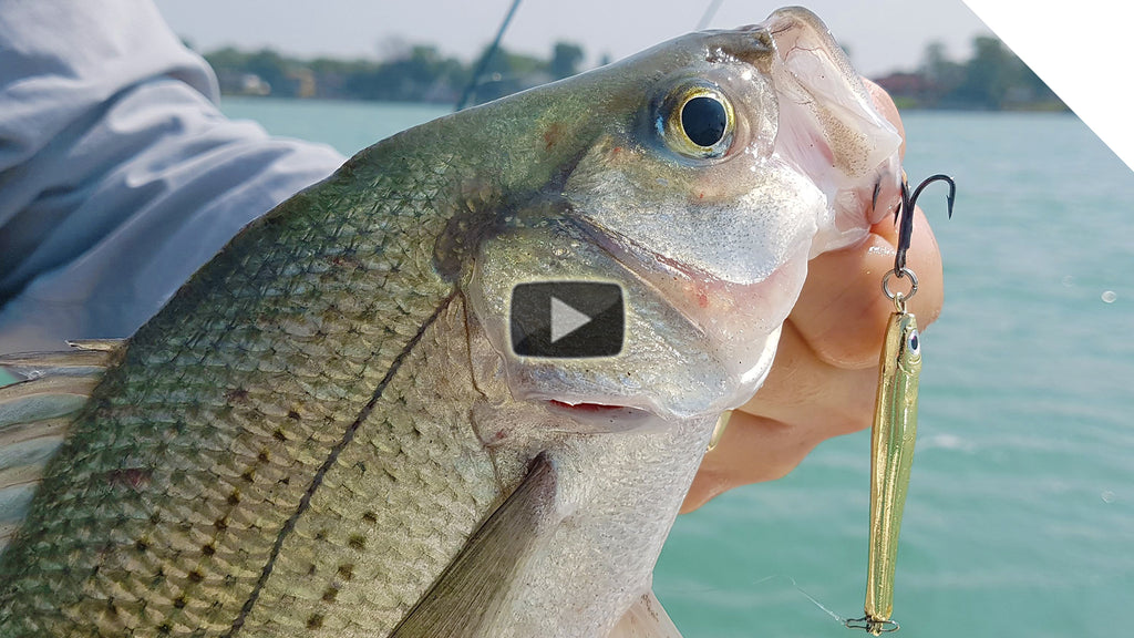 Walleye with Silver Bass Explosion - Jigging the Detroit River