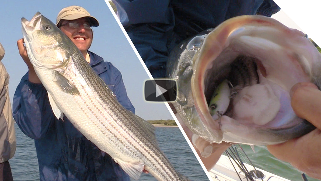 Top Water Explosion Special! Hot Striper Action on the new Mojo Macky