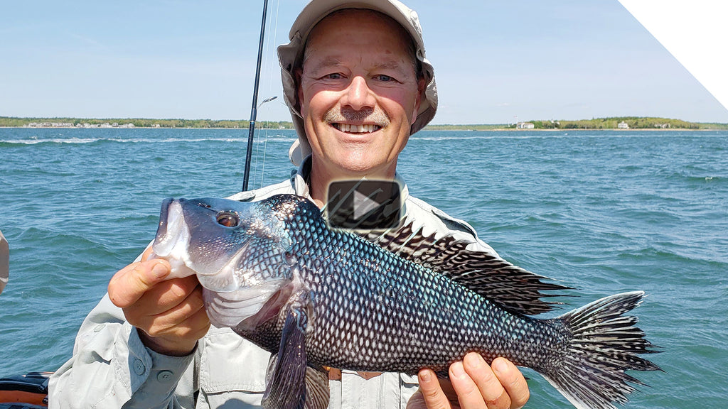 Buzzards Bay Sea Bass