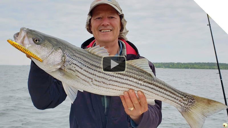 Top Water Striper Action, Action, and more Action!!