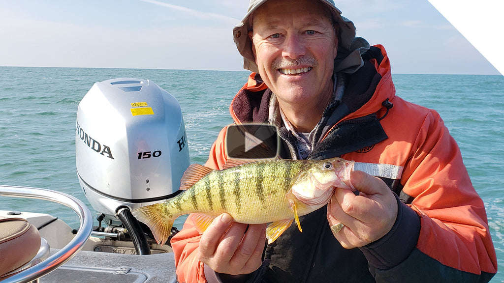 Perch Fishing - Double Minnow Rig