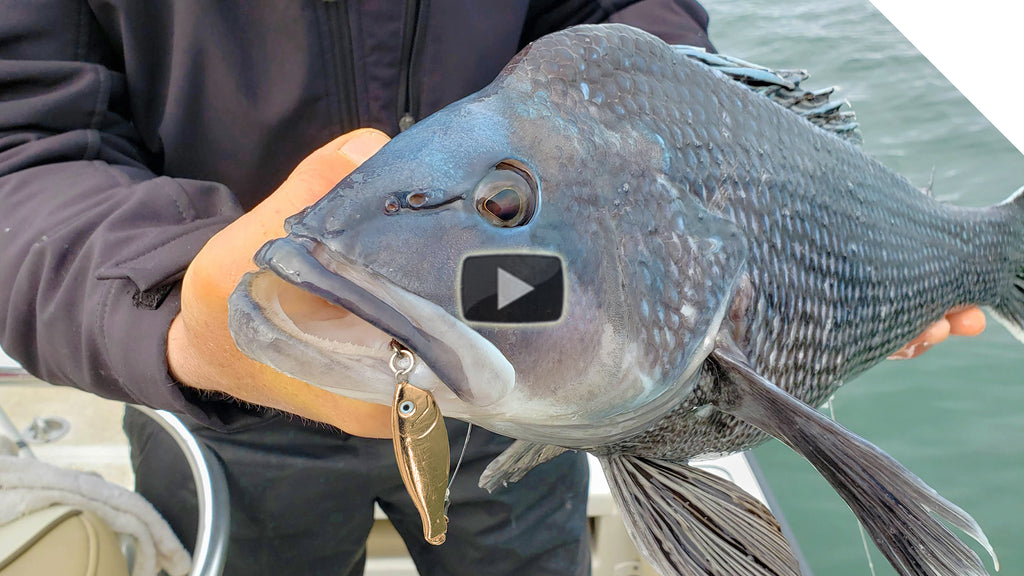 Crazy sea bass action from this new lure... Wait for it