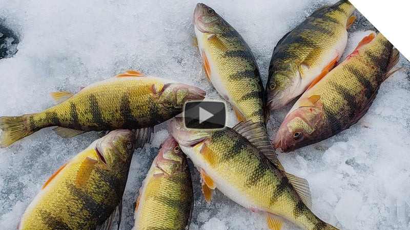 Ice Fishing for Perch on Sodus Bay, NY