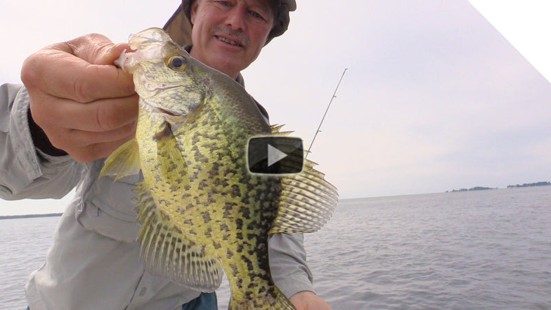 Crappie, panfish and largemouth bass using stingeye spinners