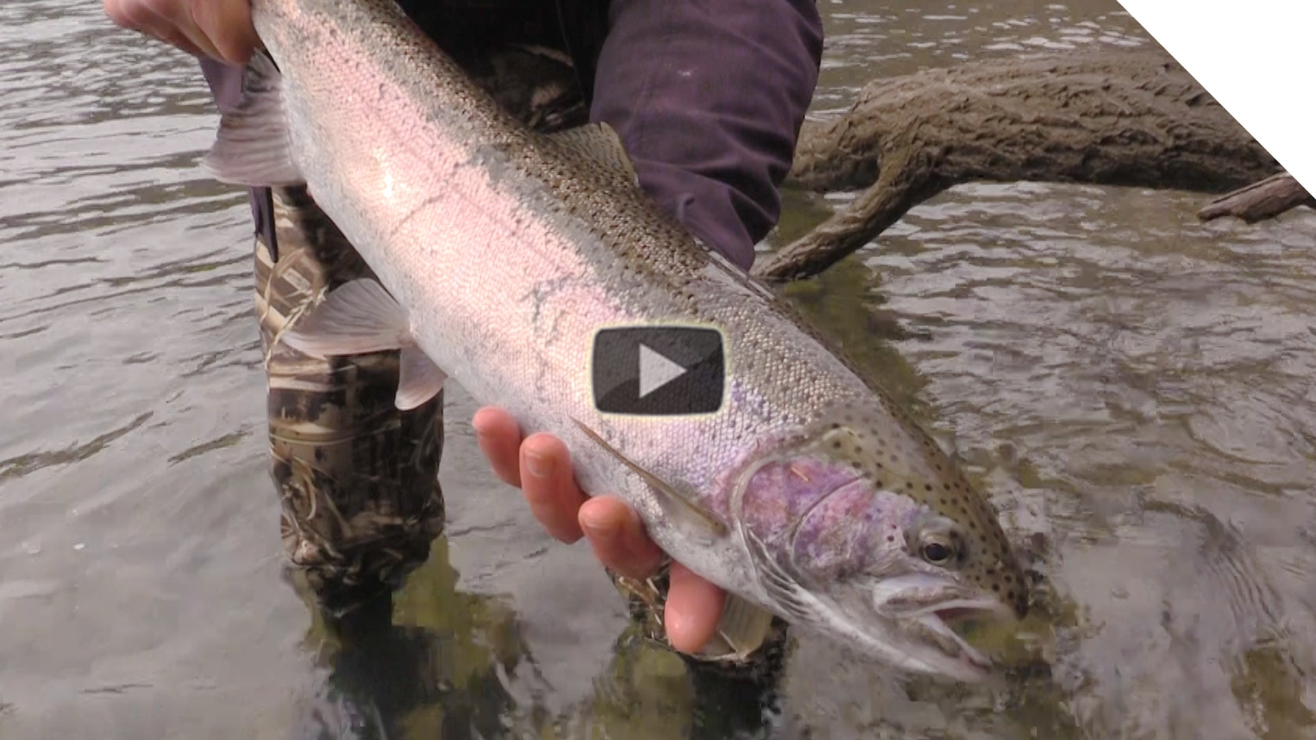 Steelhead and Spinners (Stingeye)