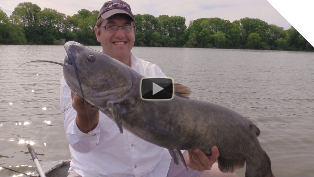 Big time summer catfish