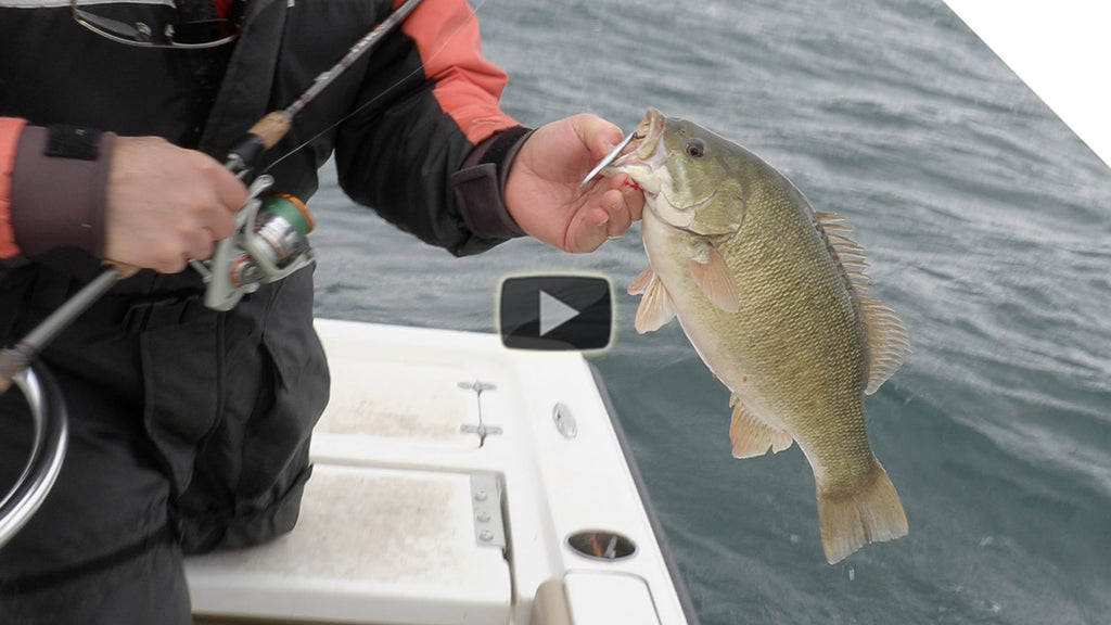 Windy Smallmouth Bass