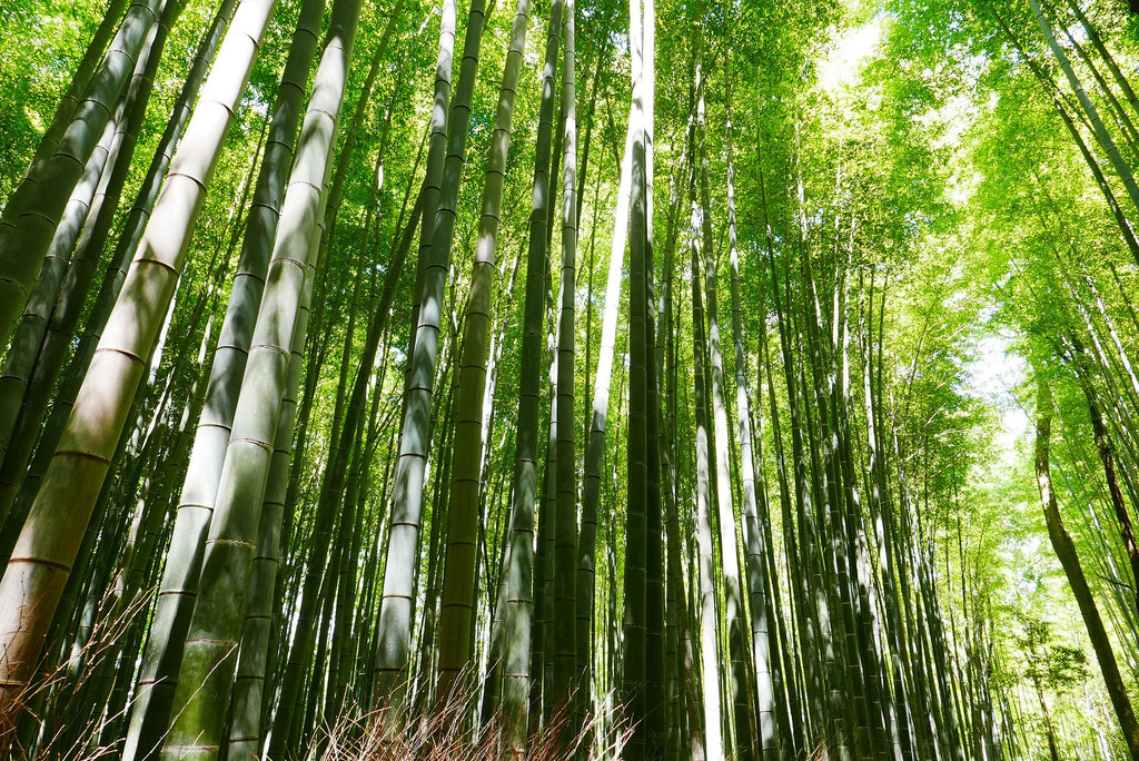 bamboo, eco-friendly, forest, blog, fabric hunting