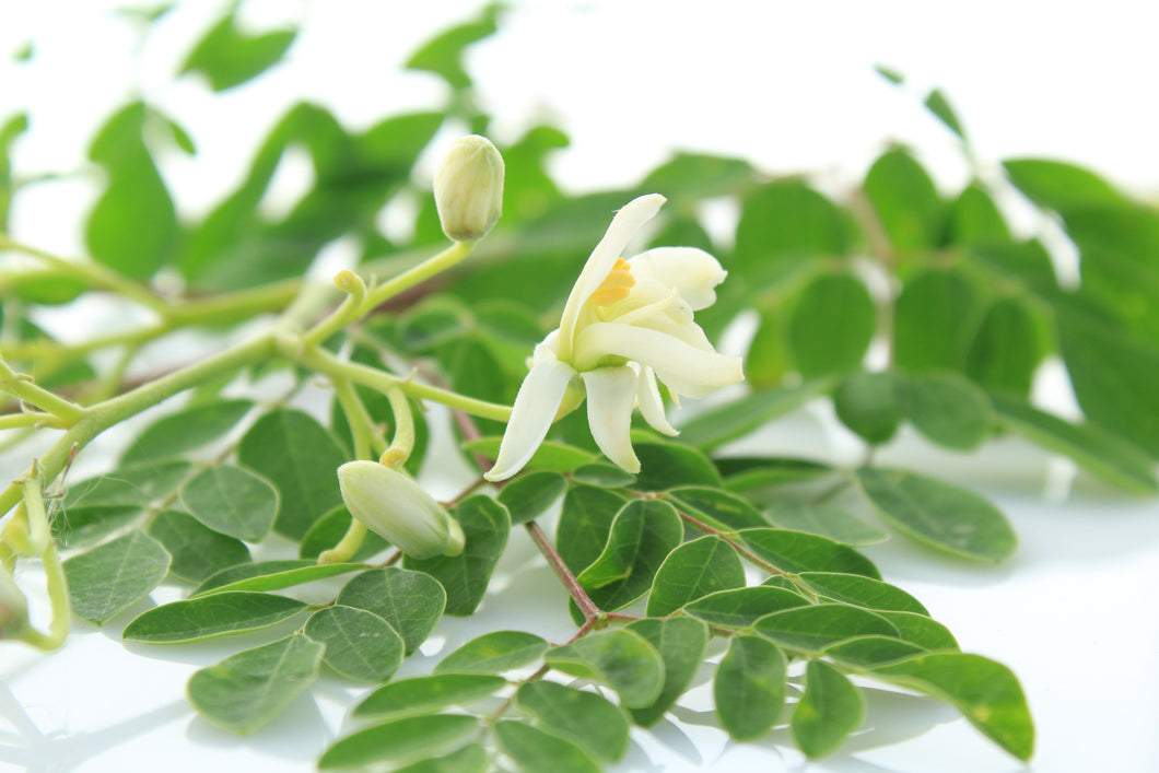The World of Moringa - Oct. 27th 10AM