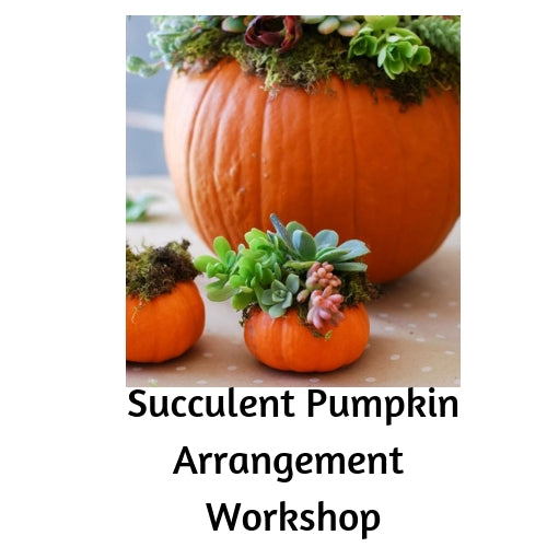 Succulent Pumpkin Arrangment Make-N-Take - Oct. 21st