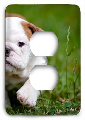 Bulldog Puppy Outlet Cover - Colorful Switches