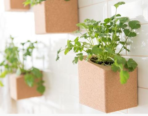 Grow Cork Block - Wall and Table Decoration
