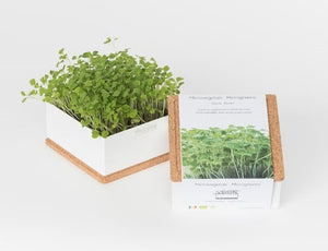 Microvegetais Grow Box