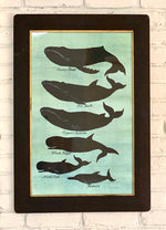 '5 Whales and a Porpoise'
