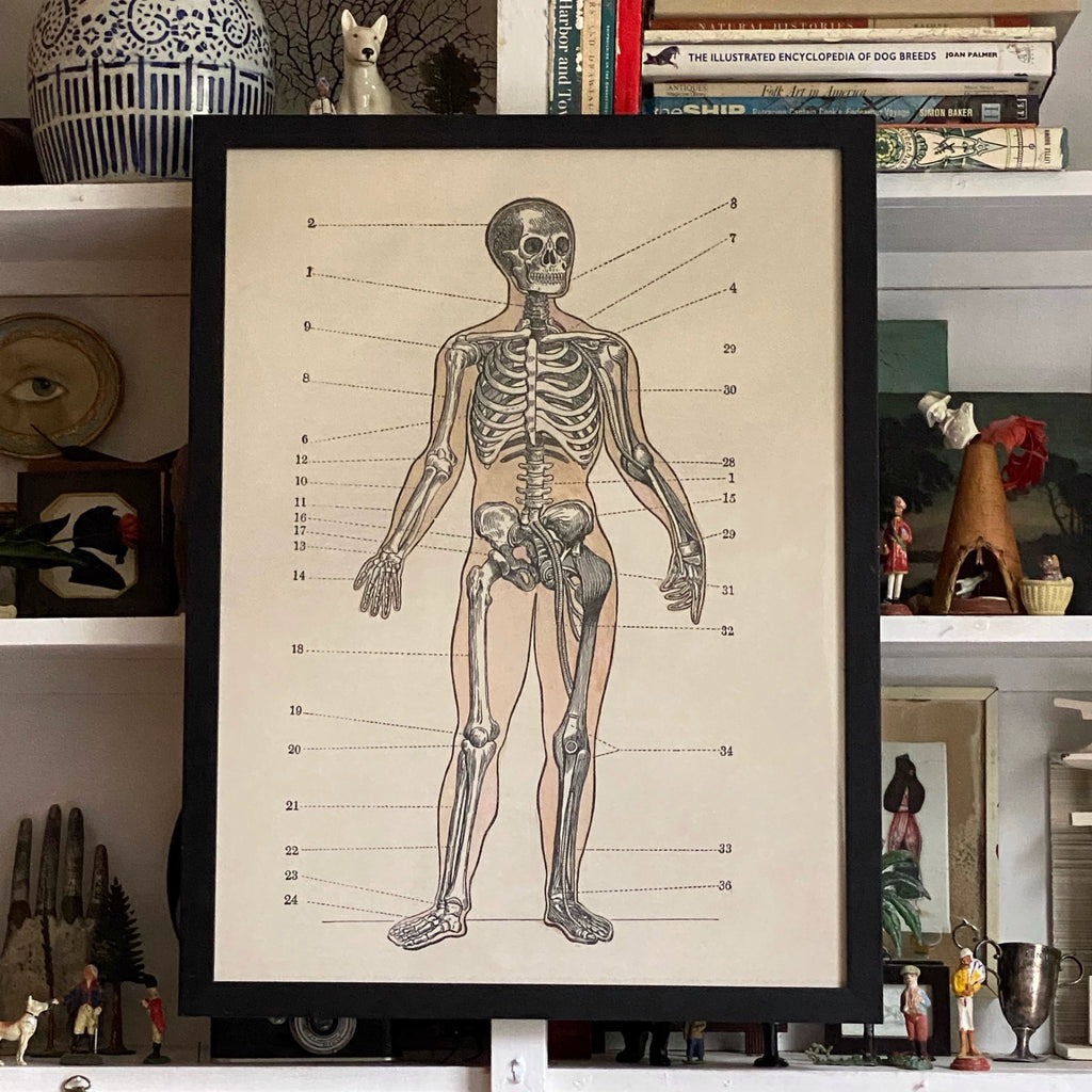 'The Skeletal System'