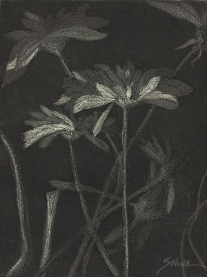 Flower Study Etching