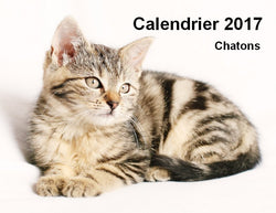 CLD002 Chatons