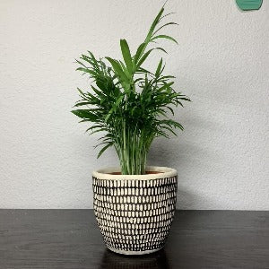 Joy Planter- Black