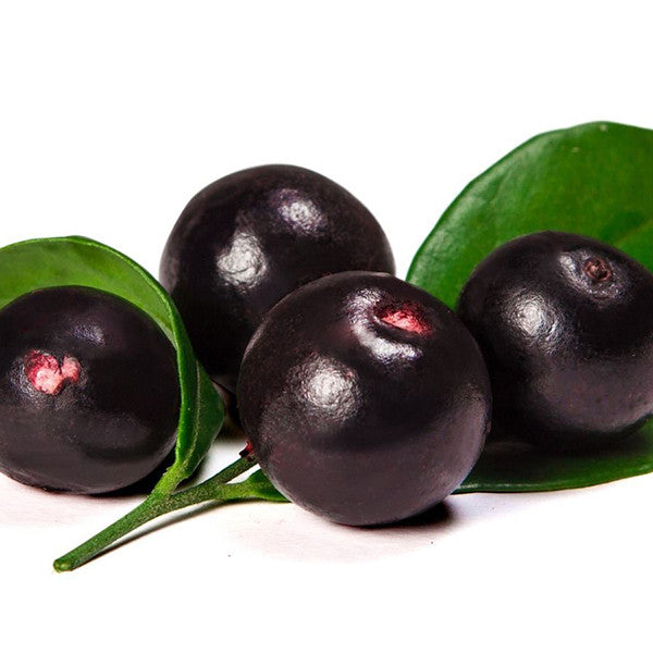 Acai Berry Benefits – from Weight Loss to Immune Booster