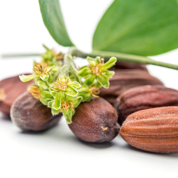 The Benefits of Jojoba Oil for Your Skin