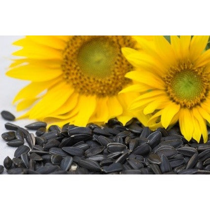 Seedhouse - Black Sunflower Seed 5kg