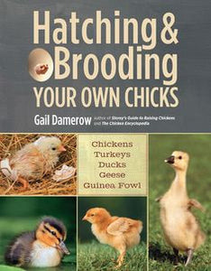 Hatching and Brooding your own chicks