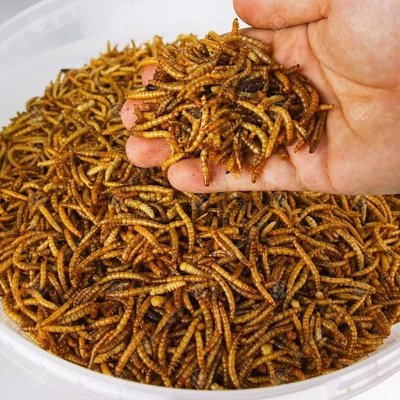 Mealworms - THREE SIZES