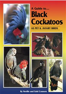 A Guide to Black Cockatoos as Pet and Aviary Birds