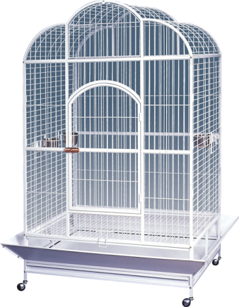 Extra Large Open Scallop Top Parrot Cage