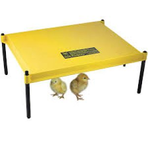 Brinsea EcoGlo Safety Brooder 2000 (50 Chick)