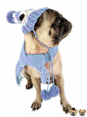 Knitted Set For Dogs Blue / Xl Clothing