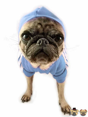 Street Hoodie For Dogs - Azure Pug Clothing