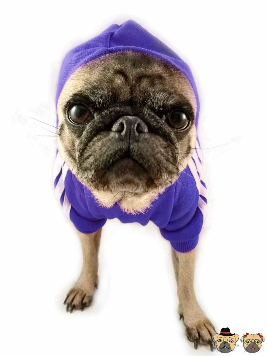 Street Hoodie For Dogs - Blue Dog Clothing