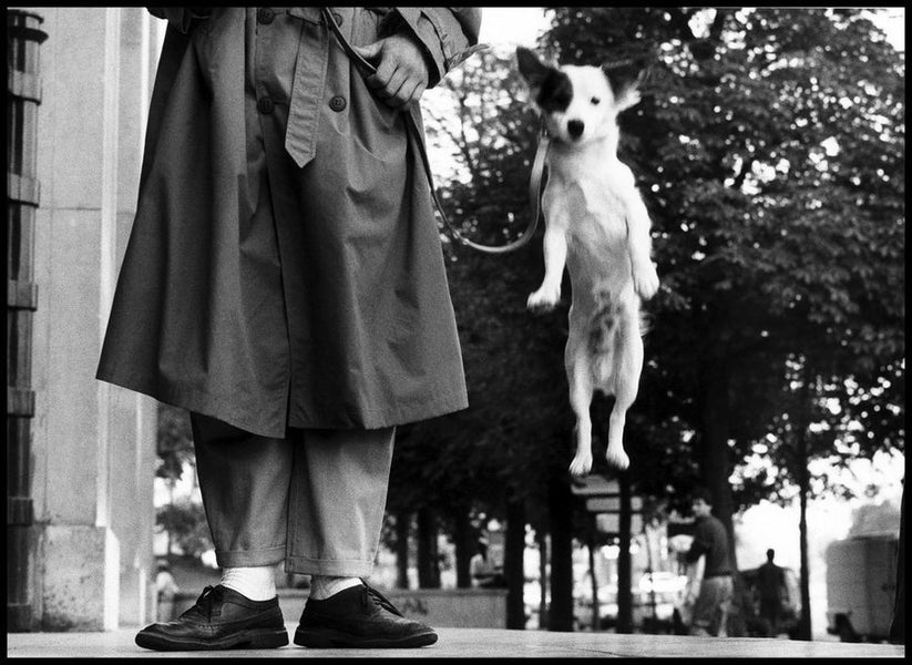 Elliott Erwitt - From Cuban Revolutionaries to Canine friends